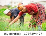 Small photo of image of beautiful African woman and a boy in green field with the boy bit blurred-black woman smiling-farm concept