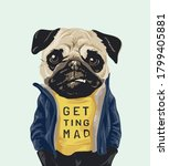 Grumpy Pug Dog In Blue Jacket...