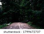 A Gloomy Path Going Toward A...