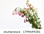 Dry Withered Flowers With...