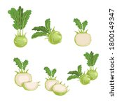 kohlrabi set. whole  halved and ... | Shutterstock .eps vector #1800149347