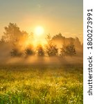 Small photo of Early morning scenery in field. Sun casting beautiful rays of light through the mist and trees. Vibrant rays of sunlight in hazy meadow. Chamomile field in sunshine. Yellow sunrise with fog in summer.