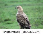 Wild Birds In The Nature
