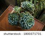 Plants. Succulent Flower Pot....