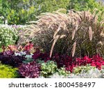 Blooming Autumn Flowerbed With...