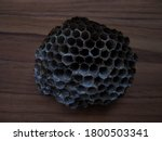 Empty Wasp Nest Close Up View