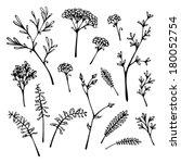 set of grass silhouettes... | Shutterstock .eps vector #180052754