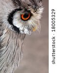 portrait of wise owl with magic ... | Shutterstock . vector #18005329