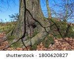 A Low Angle Shot Of A Tree...