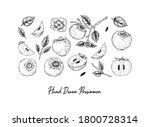 set of hand drawn persimmon... | Shutterstock .eps vector #1800728314