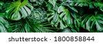 Tropical Jungle Green Leaves...