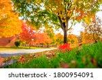 beautiful fall foliage colours...   Shutterstock . vector #1800954091