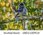 Portrait Of A Wild Cute Monkey...