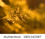 Blurred Image Of Grass Flowers...