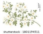 sketch floral decorative set....   Shutterstock .eps vector #1801194511