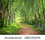 Enchanting Forest Lane In A...