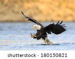 Talon Out  The Bald Eagle Has...