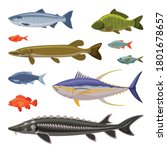 saltwater and freshwater fishes ... | Shutterstock .eps vector #1801678657