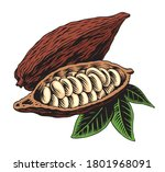 cocoa pod  beans and leaves... | Shutterstock .eps vector #1801968091