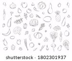 collection of hand drawn fruits ... | Shutterstock .eps vector #1802301937