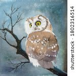 Watercolor Picture Of An Owl...