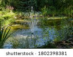 Garden Pond With Cascading...