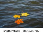 Autumn Leaves Float On The Water