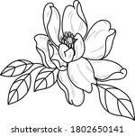 decorative beautiful flower... | Shutterstock .eps vector #1802650141