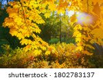 Autumn Yellow Leaf Closeup....