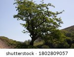 An Impressive Tree Growing Fro...