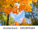 Autumn Background Landscape....