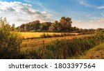 Autumn Landscape With Reeds ...