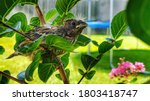 Baby Bird In Tree House Finch