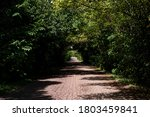 Paths Between Plants In The...