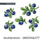 sketch blue bilberries  set of...   Shutterstock .eps vector #1803546277
