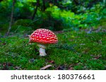 Beautiful Mushrooms Grow In Th...