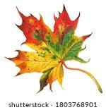 Autumn Beautiful  Multi Colore...