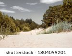 Sand Dunes And Pine Forest In...
