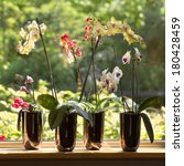 Window Sill And Plant Pots Wit...
