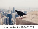 Dove On The Roof In New York....