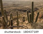 Постер, плакат: Saguaro National Park East