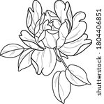 peony tattoo sketch art work  | Shutterstock .eps vector #1804406851