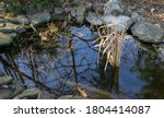 Small Garden Pond With Bunch O...