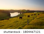 Small photo of View of landscape around Tilba and Little Dromedary with cows in a field in New South Wales, Australia