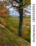 Autumn Along Duck Brook Road I...