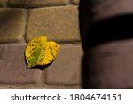 Yellow Autumn Leaf Of Heart...