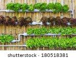 organic hydroponic vegetables...   Shutterstock . vector #180518381