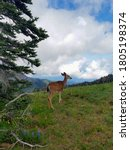 Deer On Top Of A Mountain In...