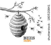 Honey Bees And Hive On Tree...
