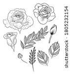 rose graphic all element vector ...   Shutterstock .eps vector #1805232154
